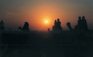 Camel trek in Rajasthan